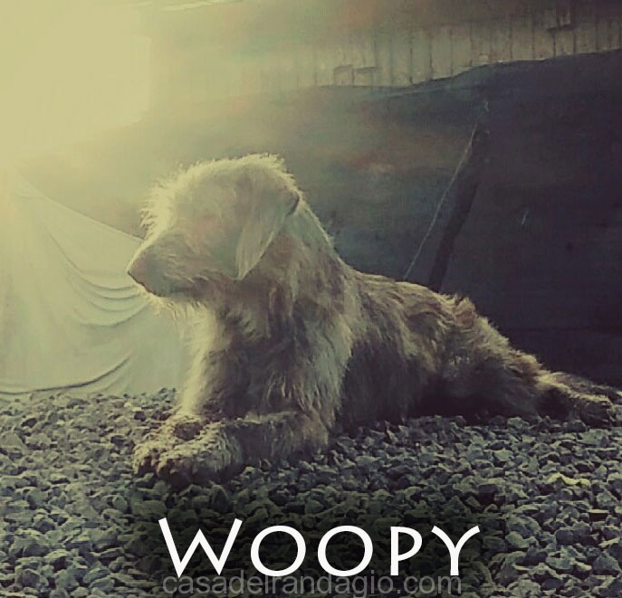 Woopy